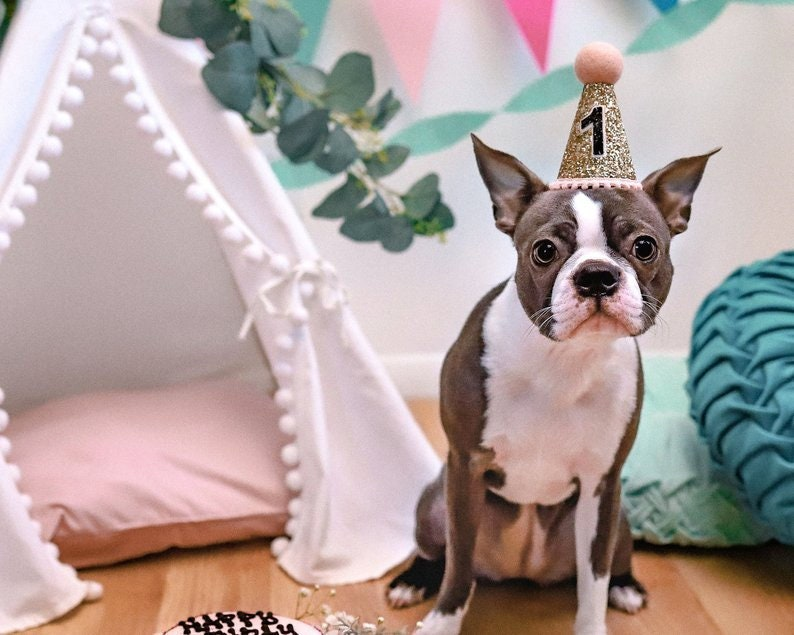 Pet Puppy Cat Kitten Kitty Pig Birthday Crown Dog Birthday Hat The Pawty Animals White /& Black Dog Gift Pet Birthday Party Outfit