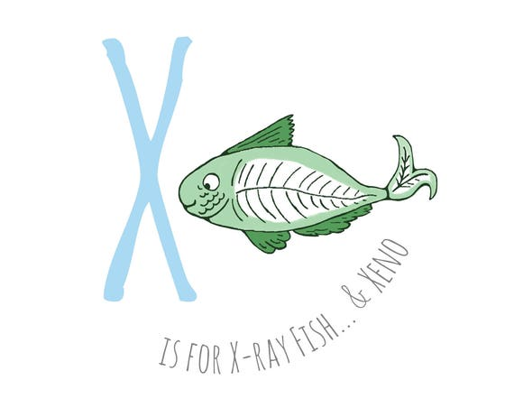 X is for X Ray Fish...