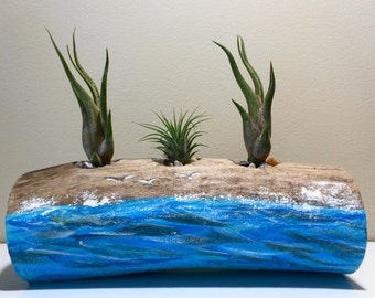 Air plant holder - Driftwood candle holders - Blue driftwood decor - Wood Planter - Driftwood art - Beach candles - Lake Erie