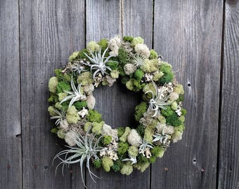 Living Air Plant Wreath with Multiple Air Plants, Reindeer Moss and Spanish Moss