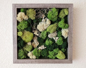 668741375ac Framed Vertical Moss Wall Garden with Reindeer Moss