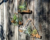 Set of Three Hanging Wood & Cotton Cord Air Plant Holders, Three Color Options (shown here in Butternut Brown) Vegan! Best Seller! Active