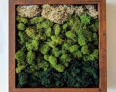 Framed Vertical Moss Wall Garden with Reindeer Moss in Shades of Green and Natural - 2 sizes and 5 frame color options