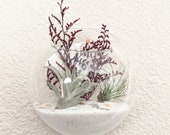 Wall Mounted Handblown Glass Globe Air Plant Terrarium Kit - two air plants with burgundy foliage, sand and shell accents
