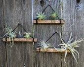 Set of Three Large Hanging Wood Suede (Dark Brown) Air Plant Holders in with Four or Six Air Plants (Copper Nails Included)