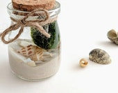 Marimo Ball Mini Water Garden with Marimo Balls, White Sand, and Shells