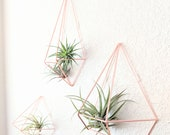 Geometric Himmeli Style Air Plant Prism Air Plant Wall Holders 3 Designs to Choose From