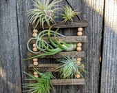 Small Hanging Wood & Suede Air Plant Ladder with Four or Six Air Plants
