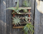 Hanging Wood & Cord Air Plant Ladder with Four or Six Air Plants - Vegan!