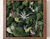 Framed Vertical Wall Garden with Multiple Air Plants, Reindeer Moss and Lichen 10x10 inches 4 frame color options