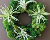Air Plant and Moss Table Accent Living Wreath - an Etsy Editor's Pick!