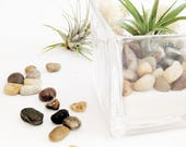 Air Plant Square Glass Terrarium with Air Plant, White Sand, Beige Moss and Brown Pebbles