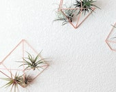 Set of Three Geometric Himmeli Style Air Plant Prisms Air Plant Wall Holders