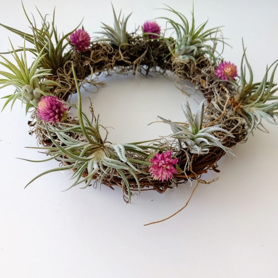 small air plant wreath with pink amaranth flowers spanish etsy