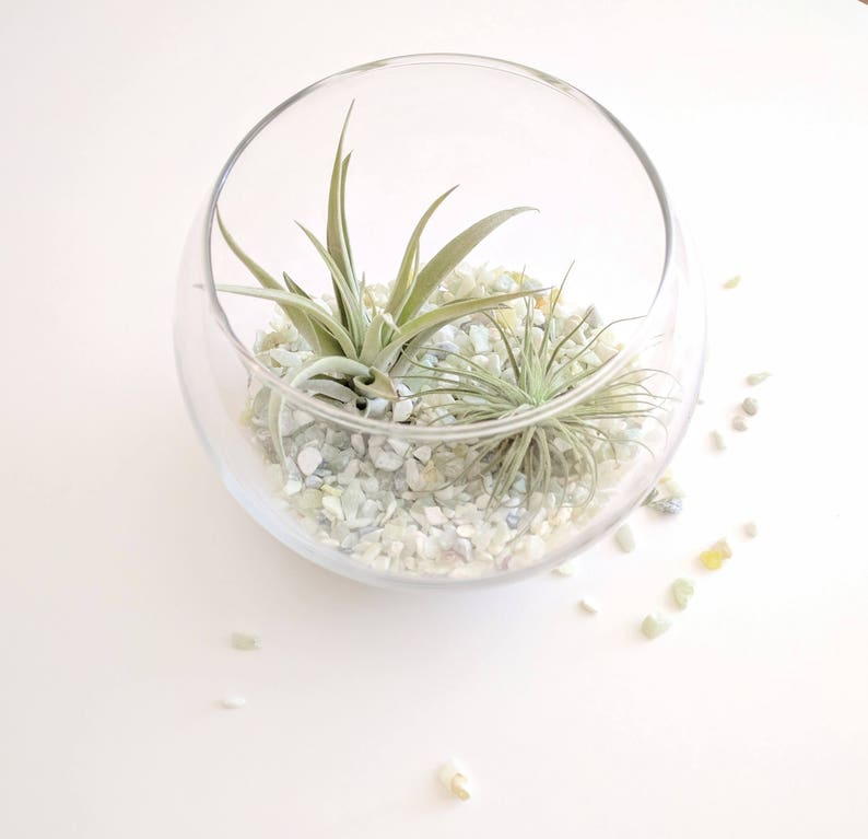 Air Plant Terrarium Kit Seated Glass Globe In 2 Sizes With Etsy