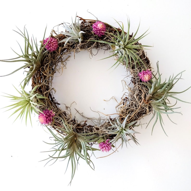 Small Air Plant Wreath with Pink Amaranth Flowers, Spanish Moss and 6 Air  Plants