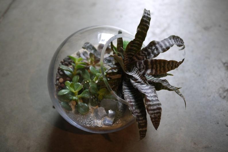 Succulent Terrarium Etsy