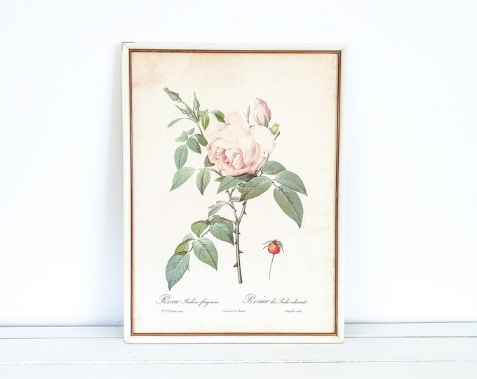 Antique framed botanical print • Rosa Indica fragrans by P.J. Redouté • vintage flower print • botanical style wall decor