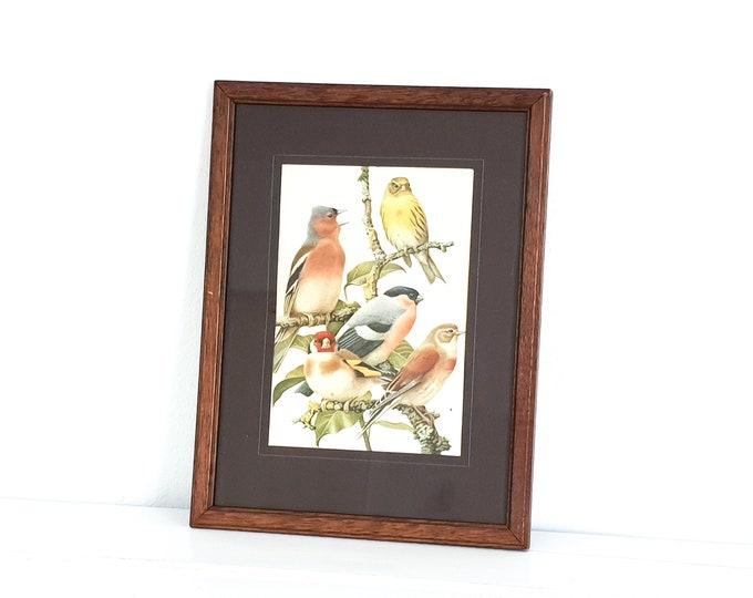 Vintage bird print in wooden frame • framed bird print • garden birds • antique bird print • vintage wallart • birdies