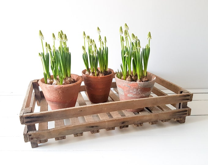 Vintage French wooden rack * vintage harvest crate * seedlings and germiners * centerpiece * farmhouse rustic decor
