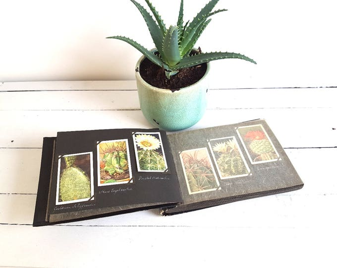RESERVED * Old Dutch collection paper cards cacti * collectible cards * Dutch cards * vintage trading cards * vintage cactus
