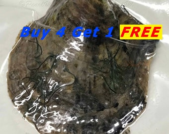 Akoya Oyster Individually Wrapped With 6-7mm Pearl BEST Quality and Price Discount - Order To Go - Buy 4 Get the 5th Free