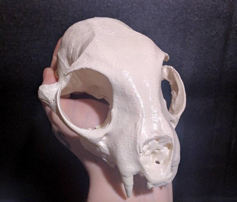 Vegan Skulls