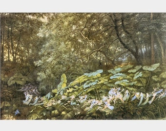 Richard Doyle 'An AUTUMNAL EVENING'S DREAM' Giclee Art Print Poster Fairy Fairies Fae Woodland Forest Fantasy Dream Vision Home Decor P74