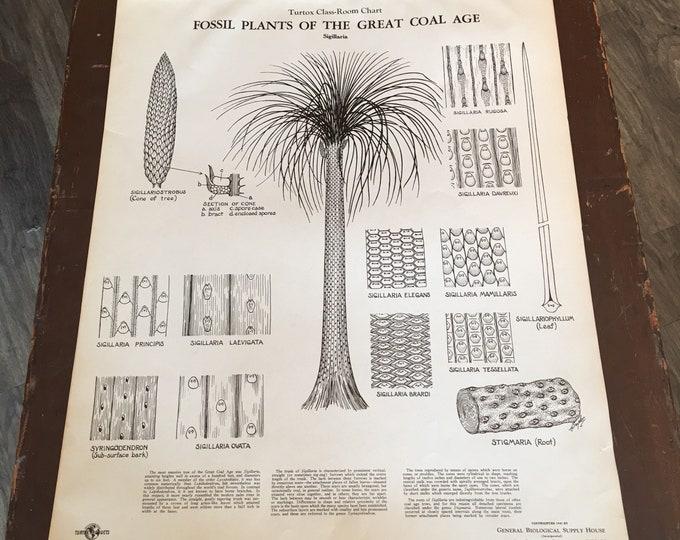 Antique 1930-1940 anatomical chart biological botanical
