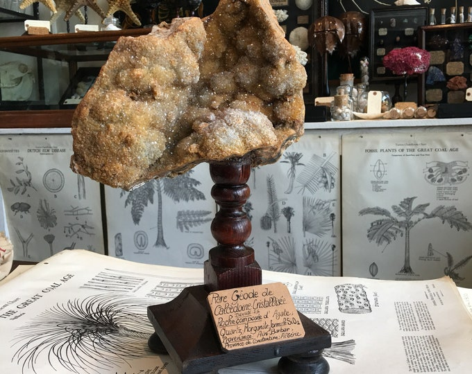Huge and rare , antique French museum style mineral on wood stand