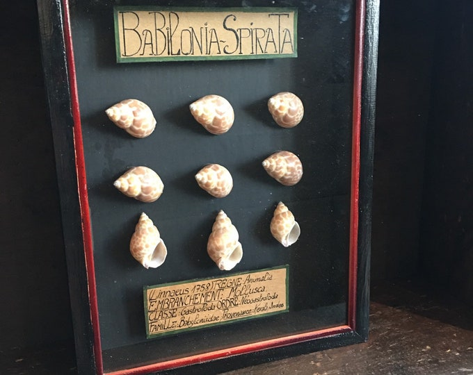 Organic anatomical shell vintage Museum style frame
