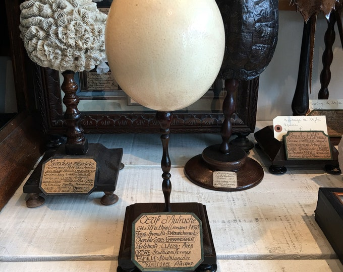 Museum mount type ostrich egg