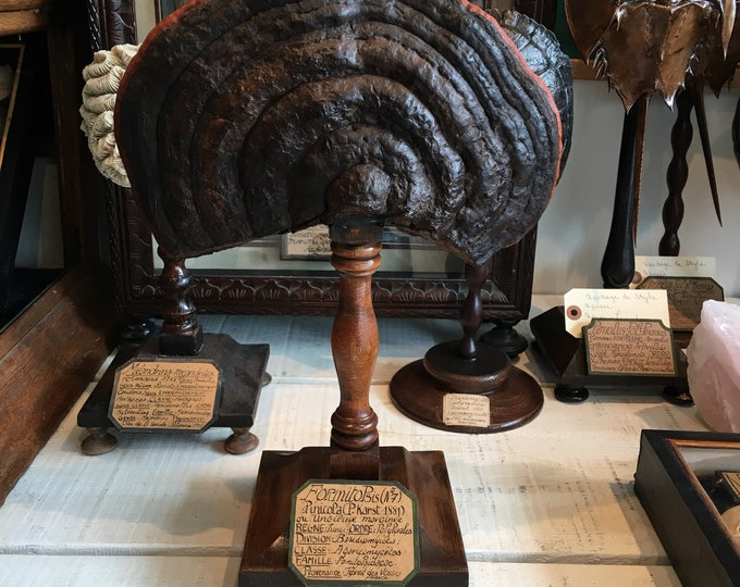 Mushroom on wood stand, antique French museum style
