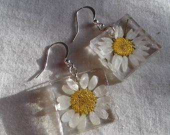 Real Natural Daisy Flower Resin Dangle Earrings Silver Handmade Jewellery nolaorchid