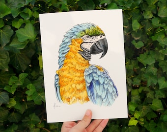 Watercolor Art Print Parrot Yellow-breasted Stara • 18 x 24 cm • Tropical Poster with Illustration of a Colorful Bird