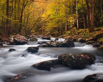Fine Art Photography PRINT, Wall Decor, Rivers and Streams, Water, Autumn, Great Smoky Mountains National Park, Tennessee | Fall in Tremont