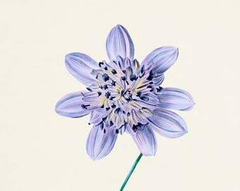 Lilac Tree Dahlia Flower Art Print, Botanical Art Print, Flower Wall Art, Lilac Flower Print, Lilac Art Print,Floral Print, Home Decor, blue