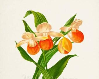 Lady's Slippers Flower Art Print, Botanical Art Print, Flower Wall Art, Flower Print, Floral, Orange Orchid Flower Art Print, Home Decor