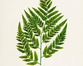 Leather Fern Art Print, Botanical Art Print, Fern Wall Art, Fern Print, Botanical Print, Home Decor, green art print