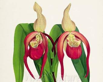 Lady's Slippers Flower Art Print, Botanical Art Print, Flower Wall Art, Flower Print, Floral Print, Red Orchid Flower Art Print, Home Decor