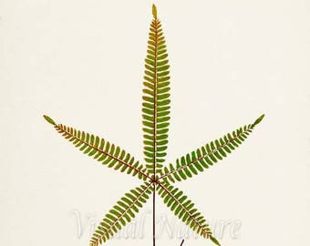 Lip Fern Art Print, Botanical Art Print, Fern Wall Art, Fern Print, Botanical Print, Home Decor, green art print