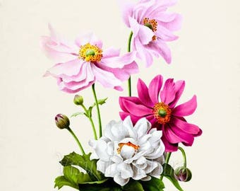 Japanese Anemones Flower Art Print, Botanical Art Print, Flower Wall Art, Flower Print, Floral Print, Home Decor, pink white