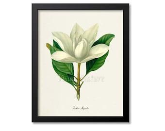 White Flower Art Etsy