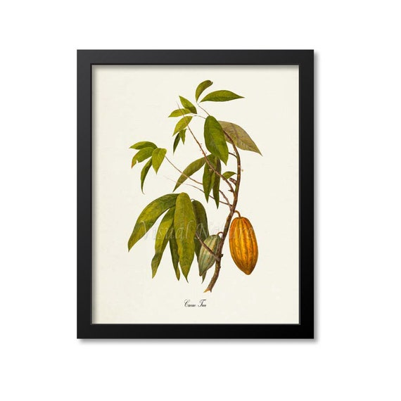 Cacao Tree Art Print Cocoa Tree Cocoa Beans Chocolate Etsy