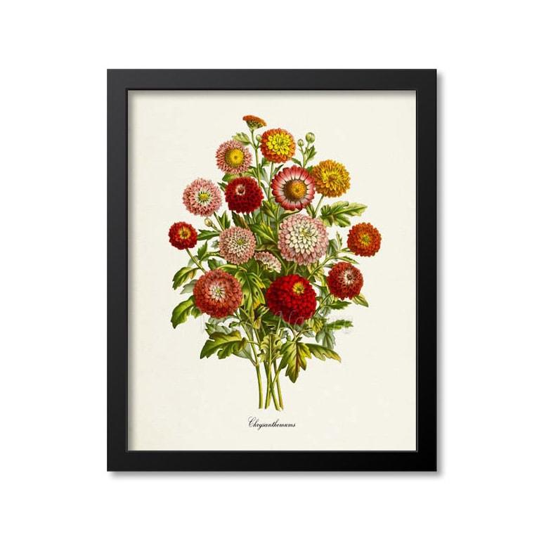 Chrysanthemum Flower Art Print Botanical Art Print Flower Etsy