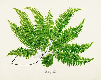 Walking Fern Art Print, Botanical Art Print, Fern Wall Art, Fern Print, Botanical Print, Home Decor, green art print