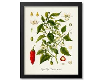 Cayenne Pepper Botanical Print, Cayenne Pepper Botanical Art Print, Cayenne Pepper Wall Art, Cayenne Pepper Decor, Capsicum Annuum