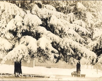 c.1907 WOODSTOCK, Ontario, Canada, SNOW Covered Trees, Beautiful SEPIA Landscape Motif, Postally Used, Excellent! Crisp Condition.