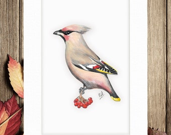 A4 Waxwing bird print, gift print, illustration, painting, wall decor, mounted, wildlife, wall art, decoration, art print