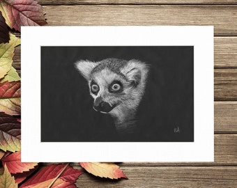 A4 Ringtailed Lemur pencil drawing, print, gift print, illustration, wall decor, mounted , wildlife, art print, decoration, wall art